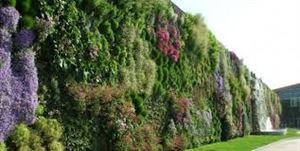 VERTICAL GARDENS AND VERTICAL GARDENS PRICE WITH CUSTOMIZED QUOTE